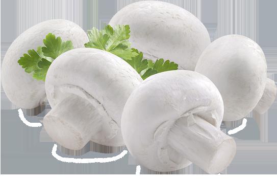 mushroom producer